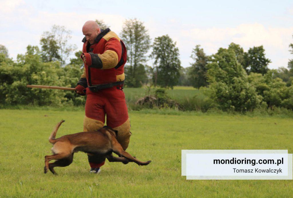 Trening Mondioring